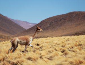 Désert d'Atacama, Chili, 2014